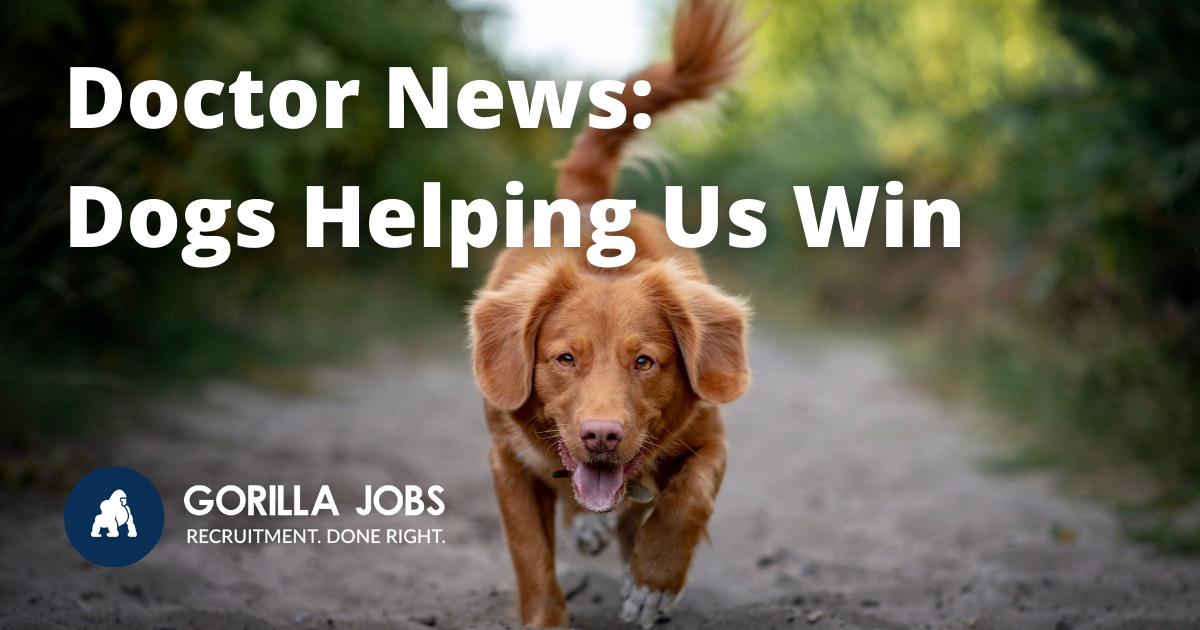 Gorilla Jobs Blog Dogs Helping Win Against Covid Brown Dog Running And Smiling In Nature